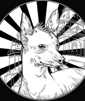 Perro-peruanoMuestra.jpg